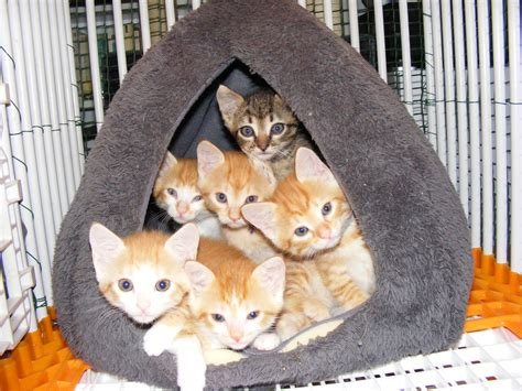 Chatons adoptés | Chats des Rues 63