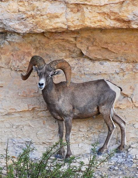 Big Bend Ranch State Park Nature — Texas Parks & Wildlife