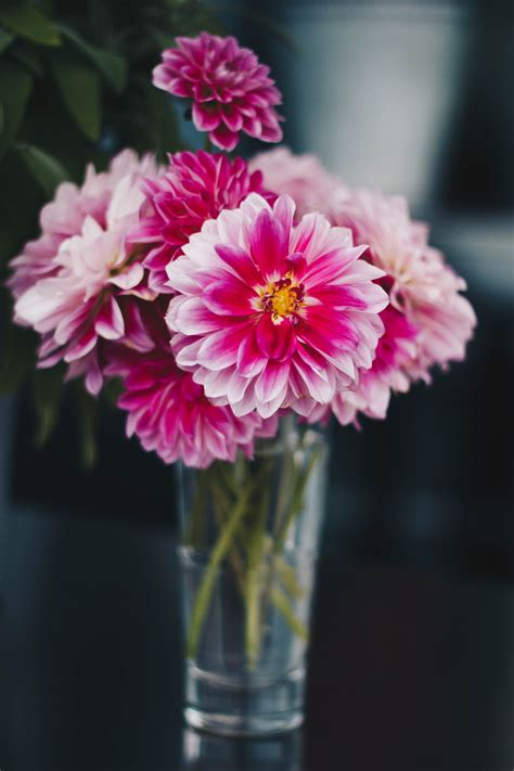 Close-Up Photography Flowers in a Vase · Free Stock Photo