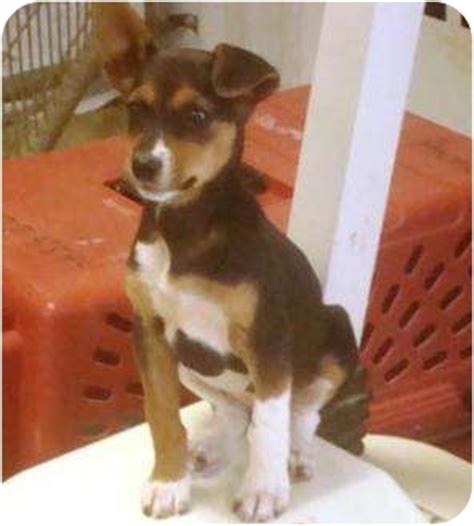 Female Puppy | Adopted Puppy | Irvington, KY | Jack