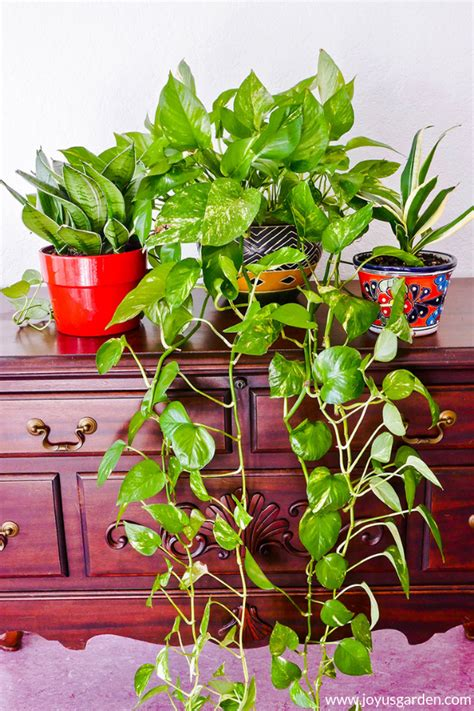 7 Easy Tabletop and Hanging Houseplants for Beginners