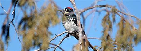 Bird Watching in the Chisos Mountains - Big Bend National